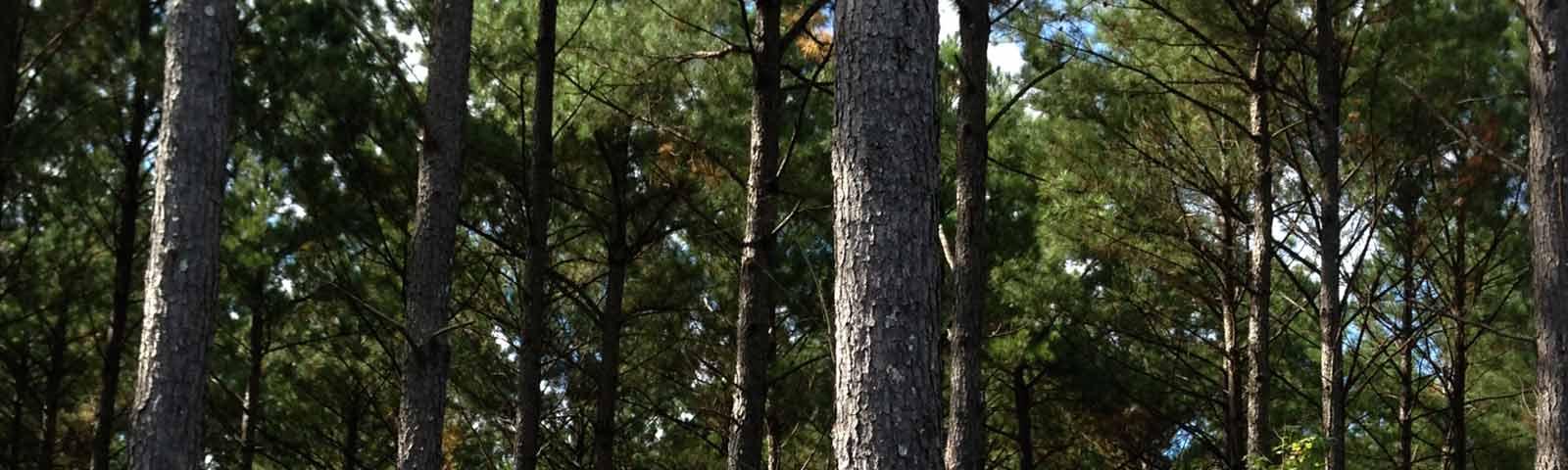 Pine/Oaks Land & Timber